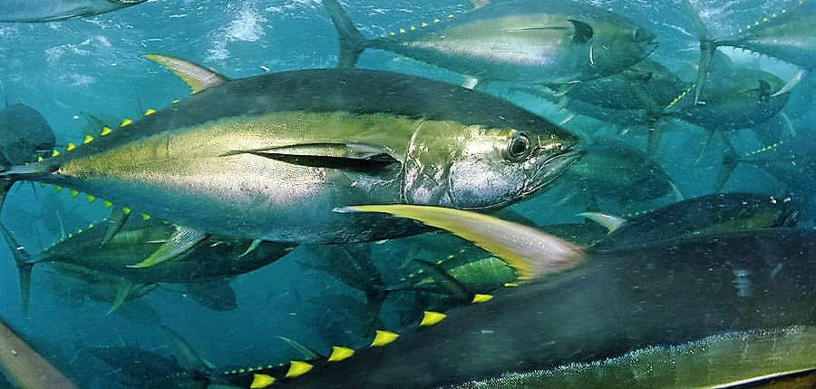 For The Best Tuna Fishing In Costa Rica